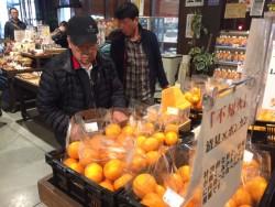 試食もできる柑橘コーナー