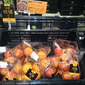 """脇水農園さんの""""ブラッドオレンジ""""「モロ」"""
