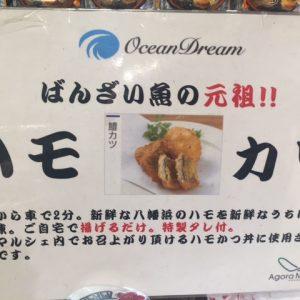 八幡浜港の魚・海の幸