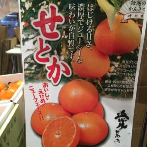 柑橘・せとか入荷!