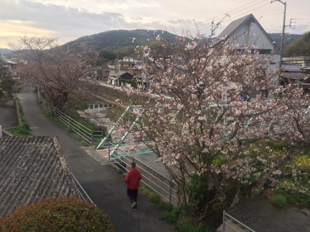 五反田の桜