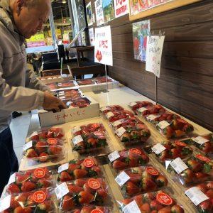 イチゴが最盛期