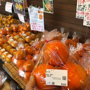 八幡浜名産『富士柿』入荷